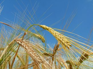 Investing in Ukraine: agriculture New grain terminal in Chornomorsk port in 2018