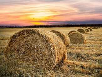 Ukraine agriculture: Increase in Revenues from Lease of State-Owned Agricultural Land in Ukraine